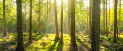 Hoe duurzaam is het gebruik van pallets?
