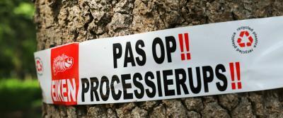 Processierups bestrijden